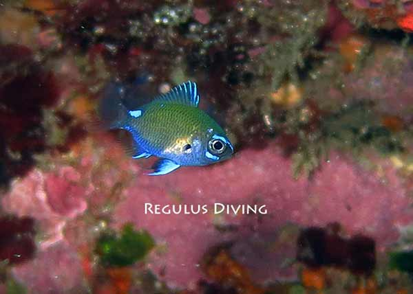 八丈島 ダイビング 水中写真 ブログ